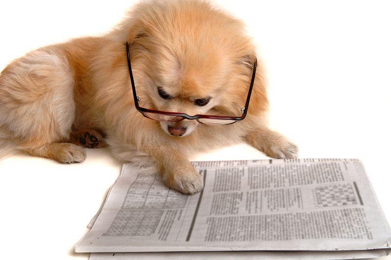 Dog paper